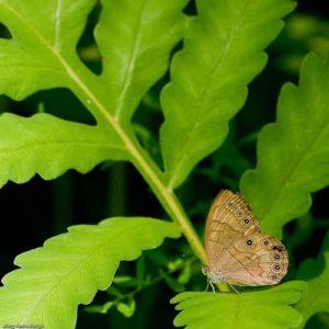 appalachian-brown_ht-marsh_20070818_0396