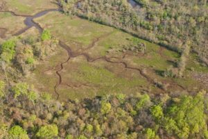 Aerial - Marsh in Spring © Mary Anne Borge