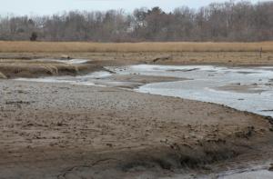 tidal_mud_flats_Watsons-Creek_MALeck1