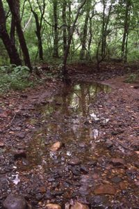 Trenton Gravels at Abbott Brook (Watson Woods). ©M. A. Leck