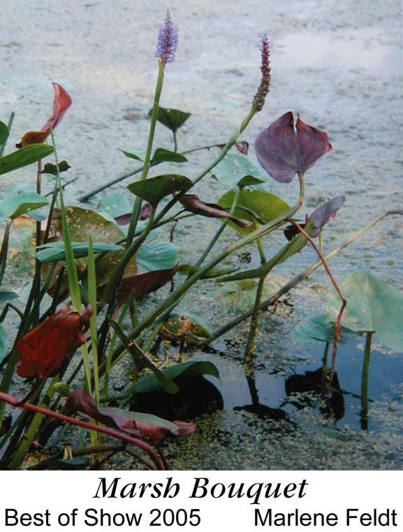 Marsh Bouquet