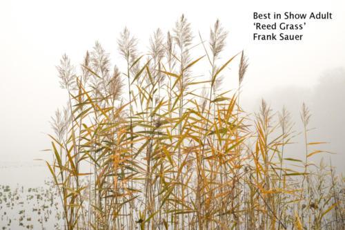 1  a f sauerf reedgrass