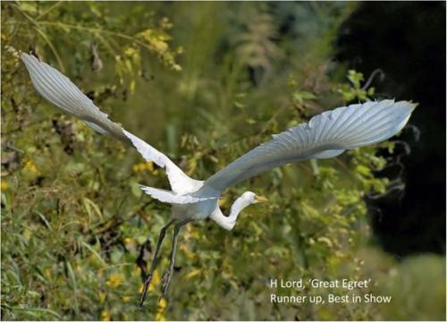 2-lord-egret