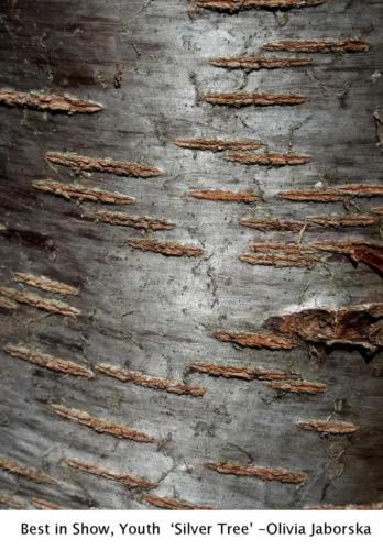 2 y f jaborskao silvertree