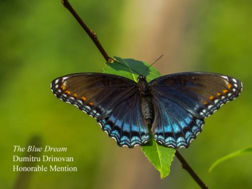 DrinovanD_The-Blue-dream